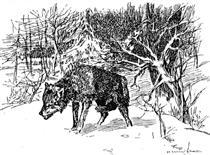 Wolf - Mykola Samokysh