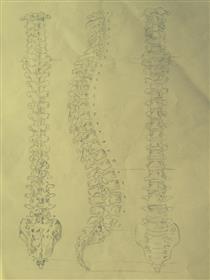 Anatomical Studies - Youssef Idrissi