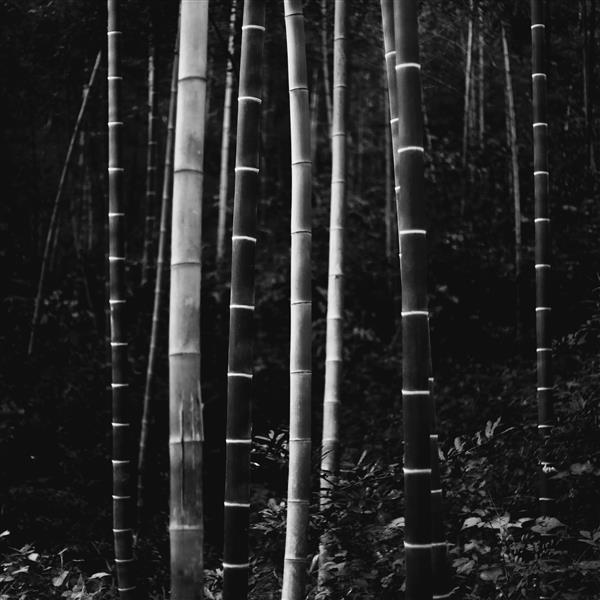 bamboo, 2015 - Chaokun Wang