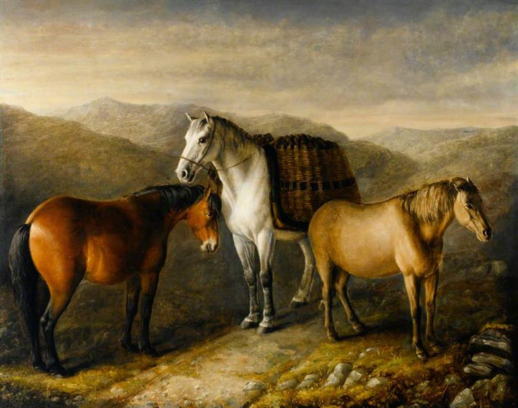 West Highland Ponies - William Shiels
