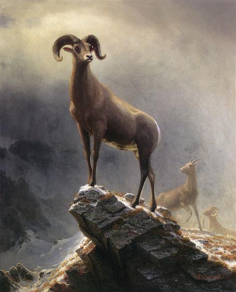 Rocky Mountain Sheep, c.1882 - c.1883 - Albert Bierstadt