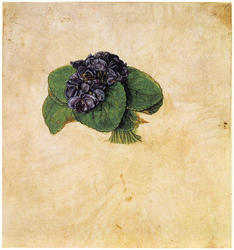 Violet Bouquet - Albrecht Durer