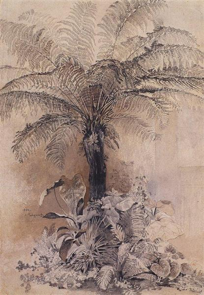 Tropical plants, 1854 - Олексій Саврасов