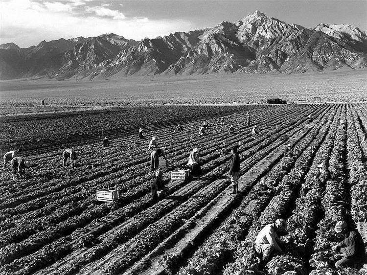 Farm, farm workers, Mt. Williamson in background, Manzanar Relocation Center, California - Ansel Adams