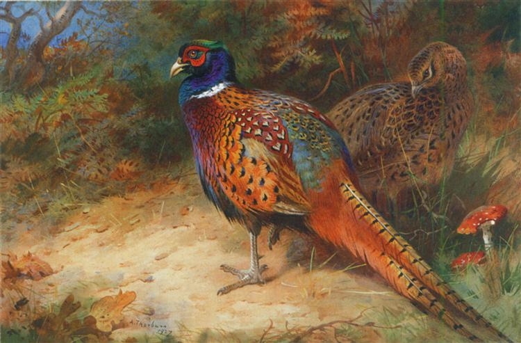 Cock and hen pheasant in the undergrowth, 1927 - Archibald Thorburn