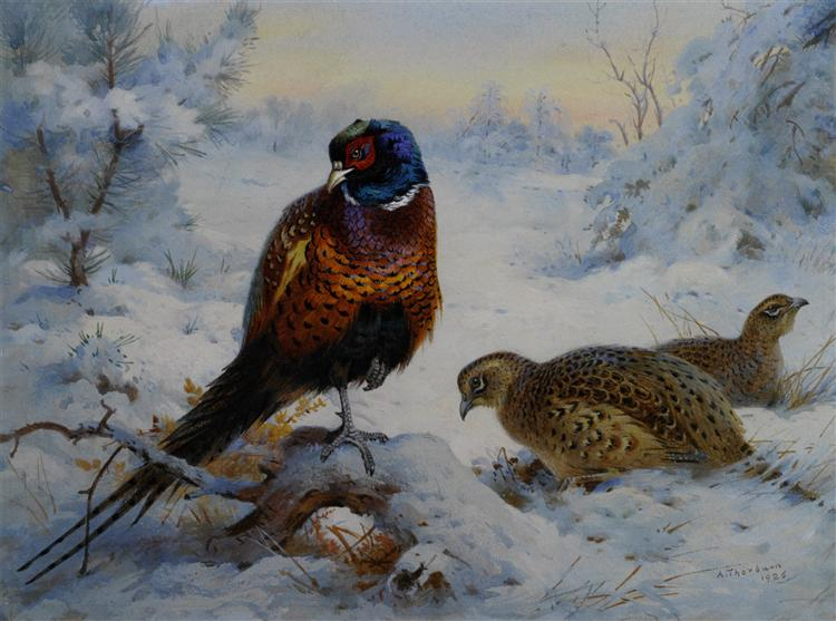 Cock and Hen Pheasant in Winter, 1926 - Archibald Thorburn