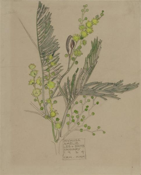 Mimosa, 1924 - Чарльз Ренні Макінтош