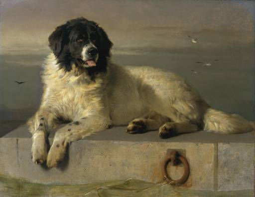 A Distinguished Member of the Humane Society, 1838 - Edwin Henry Landseer