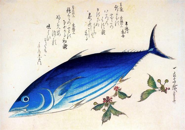Katsuwonus pelamis - Hiroshige