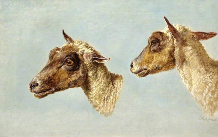 Study of Sheeps' Heads, 1836 - James Ward