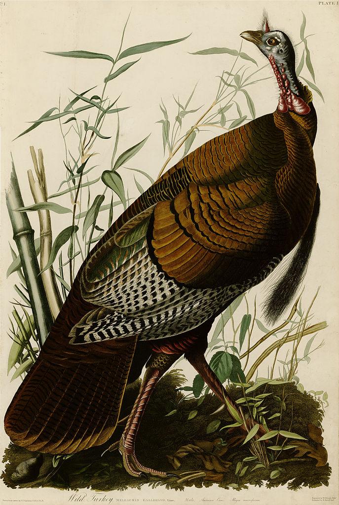 Art of the Day: John James Audubon, Louisiana Heron