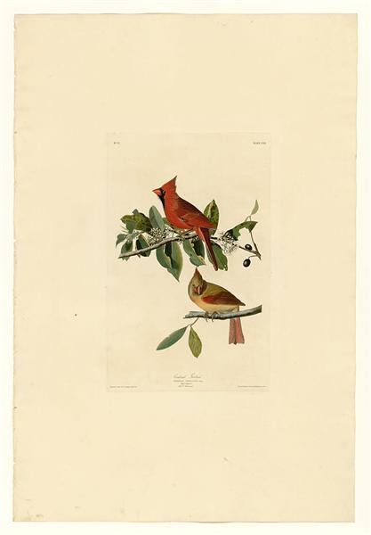 Plate 159 Cardinal Grosbeak - John James Audubon