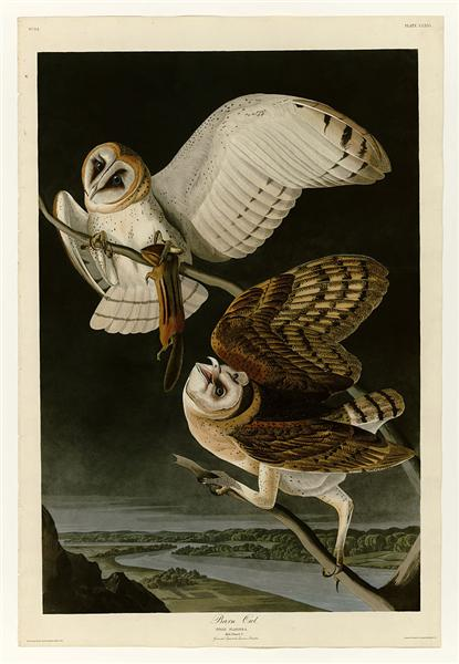 Plate 171 Barn Owl - John James Audubon