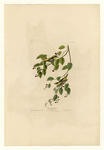 Plate 60. Carbonated Warbler - John James Audubon
