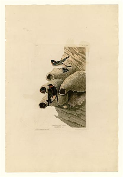 Plate 68 Republican or Cliff Swallow - John James Audubon