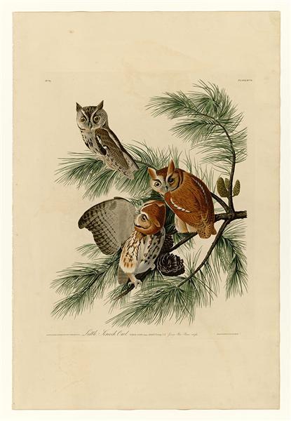 Plate 97 Little Screech Owl - John James Audubon