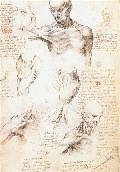 Anatomical studies of a male shoulder, c.1509 - Leonardo da Vinci