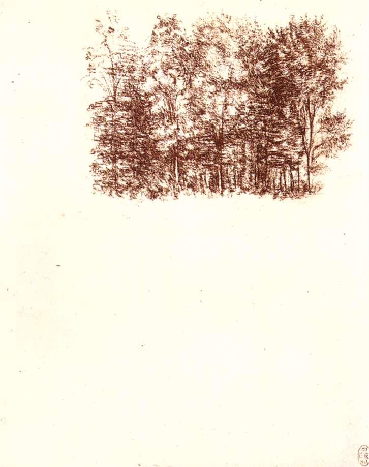 Birch copse, 1500