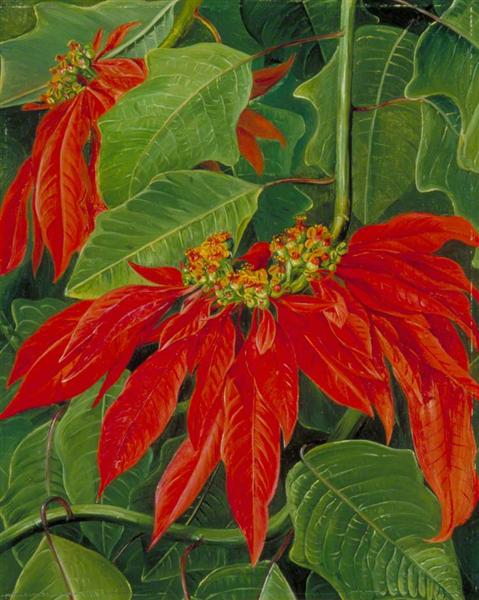 Flor de Pascua or Easter Flower, at Morro Velho, Brazil, 1873 - Marianne North