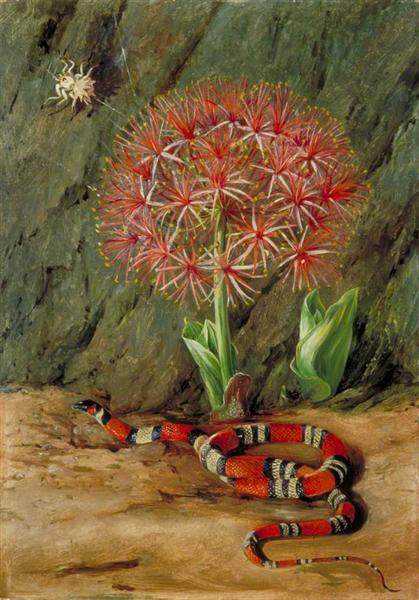 Flor Imperiale, Coral Snake and Spider, Brazil, 1873 - Marianne North
