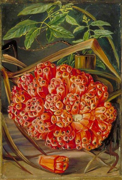 Ripe Fruit of a Screw Pine and a Sprig of Sandal Wood, 1870 - Marianne North
