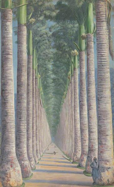 Royal Palm Avenue, 1872 - Marianne North