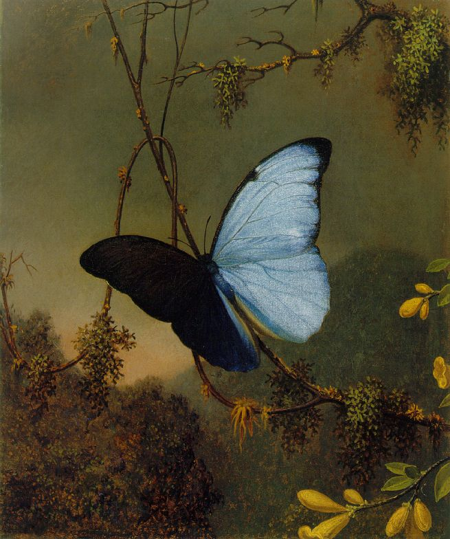 Famous butterfly paintings - photo#15