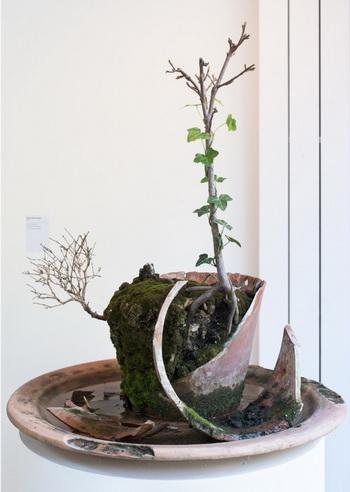 Plante morte en peau, 2009 - Michel Blazy