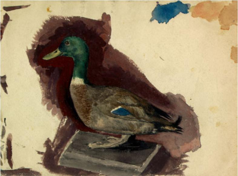 Stuffed duck, 1892